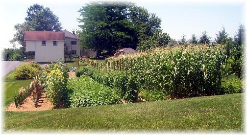 Rissermill Road garden 7/10/11