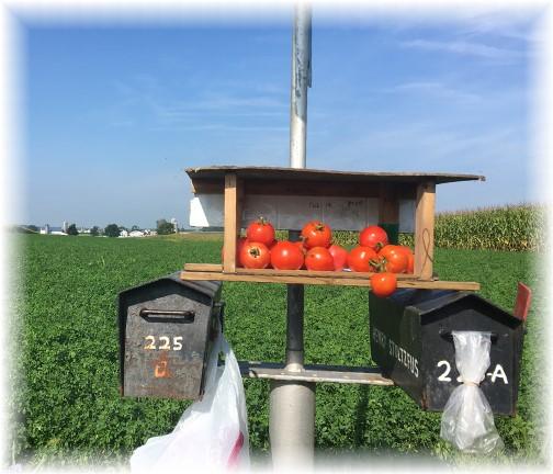 Roadside tomatoes 8/31/17