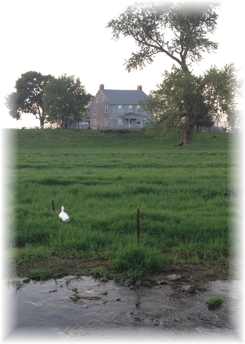 Rutt farm and ducks 5/12/14