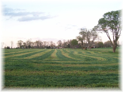 Rye harvest 4/9/12