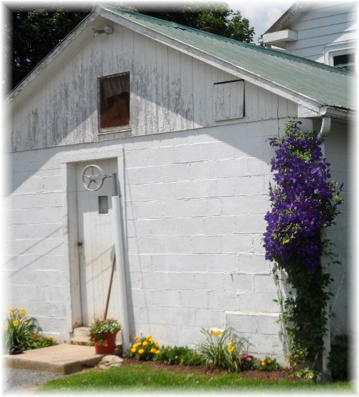 Shed with flowers 06-20-13