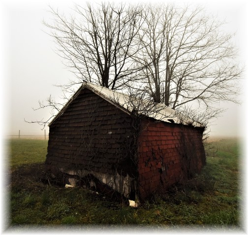 Old shed on a foggy morning 4/4/18 Photo by Shawn Sauerwine
