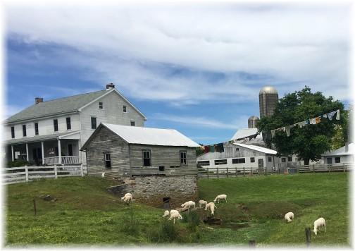 Lancaster County farm 6/8/17