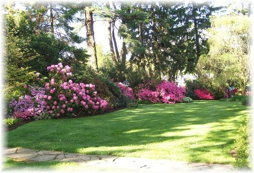 Steudler Azalea gardens 5/6/11