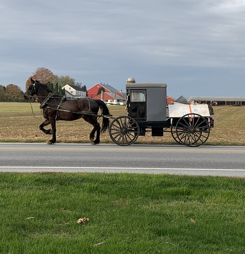 Horse and buggy pickup on Strasburg Pike 11/7/19 click to enlarge