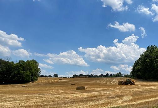 Straw bales in field