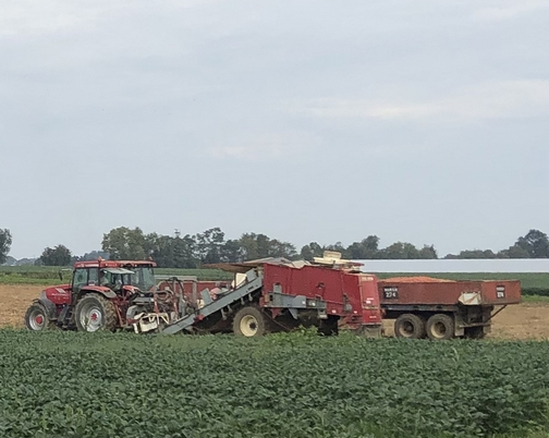 Tomato harvest on Hirsh farm 9/9/19