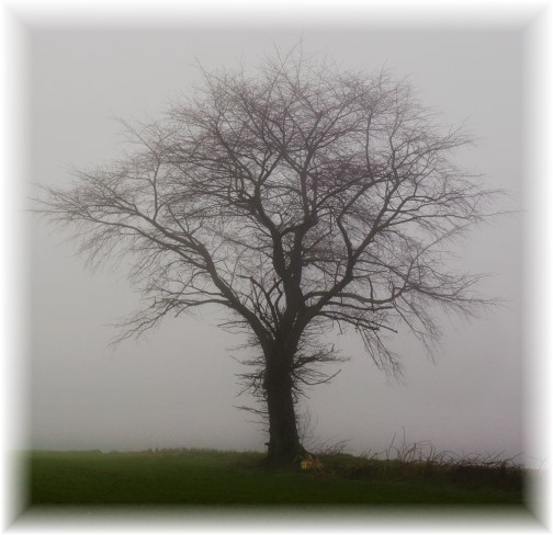 Tree on a foggy morning 4/4/18 Photo by Shawn Sauerwine