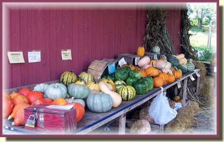 Union Mill Acres pumpkin stand  in Lancaster County PA