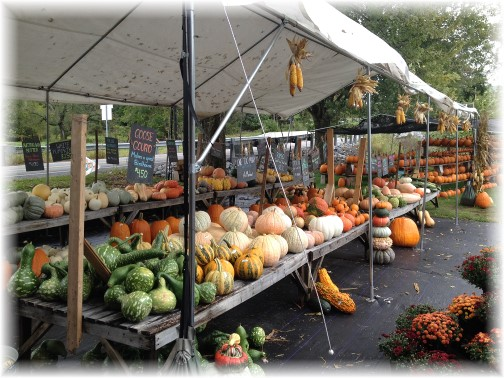 Union Mill Acres pumpkins 9/30/15