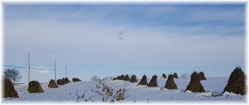 Wheat shocks in snow 1/27/16