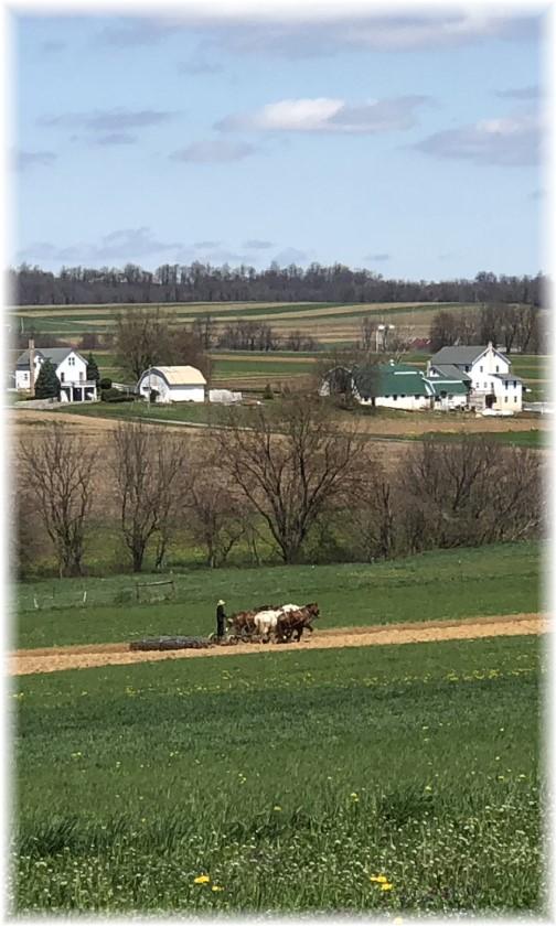 Amish team field work near White Horse, PA 4/26/18