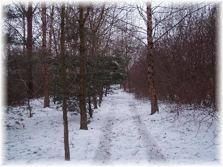 Snowy trail along Donegal Creek