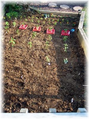 Brooksyne's freshly planted garden