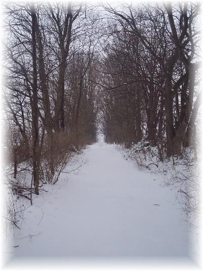 Snowy path 2/22/08