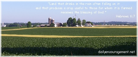 Amish team planting corn