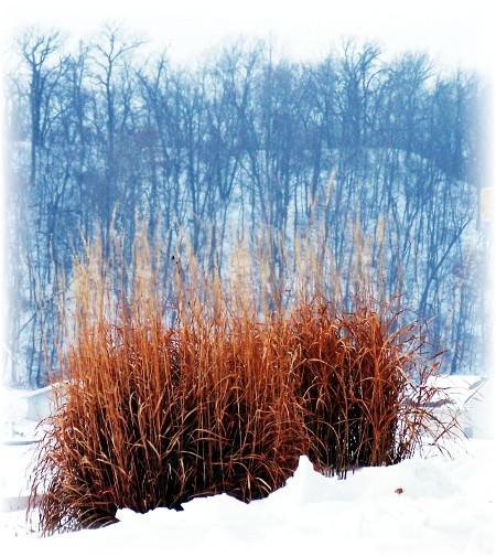 Wisconsin winter scene