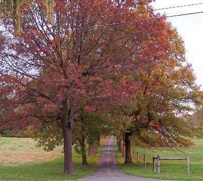 Photo of tree-lined lane