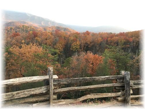 Smoky Mountain foliage 11/22/16