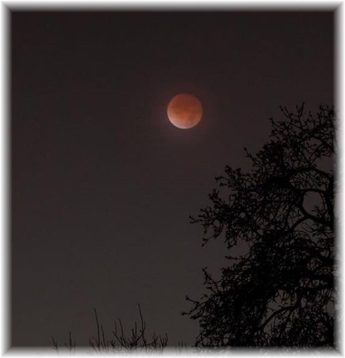 Blood moon (Photo by Ester)