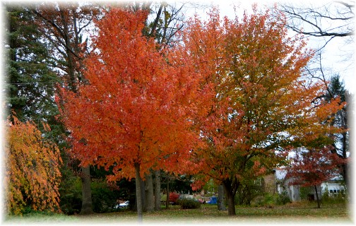 Branson foliage (photo by Doris High)