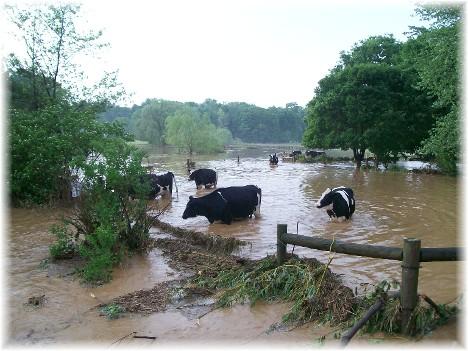 Donegal Creek, Memorial Day storm 5/31/10