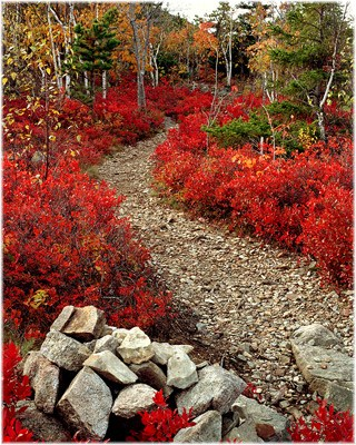 """At the Trailhead"" Acadia National Park, Bar Harbor, ME (Howard Blichfeldt)"