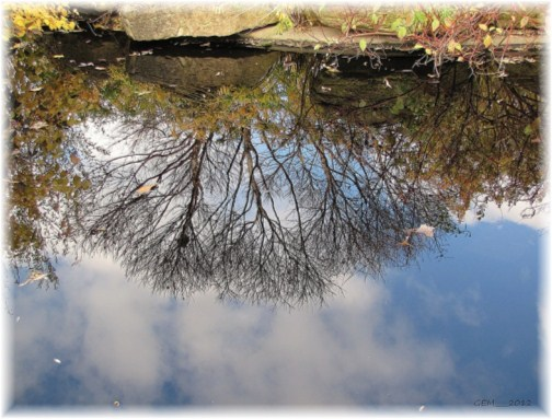 Refection on water (photo by Georgia)