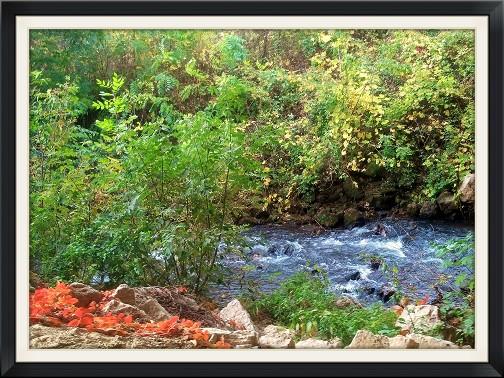 Wisconsin trail walk with stream (photo by Georgia McKelvey)