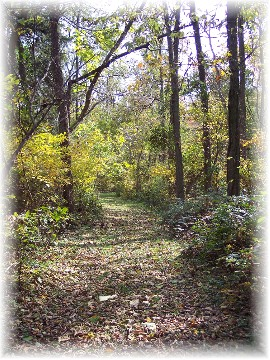 Photo of path