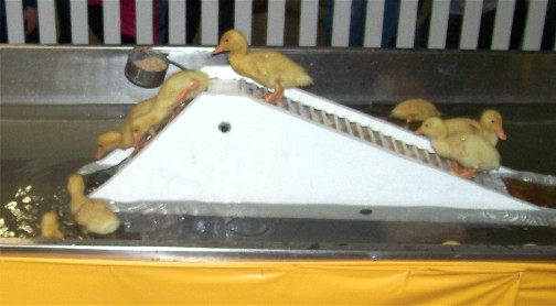 2011 Pennsylvania Farm Show duckling slide