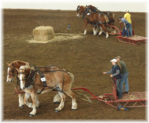 Horse pulling contest at 2013 Pennsylvania Farm Show