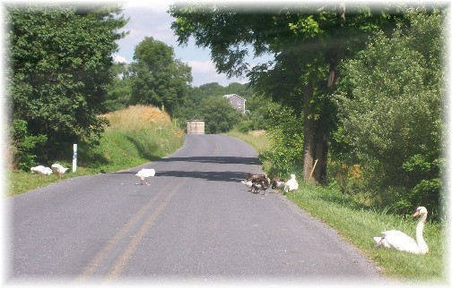 Berks County PA Blue Mountain Road 7/1/11