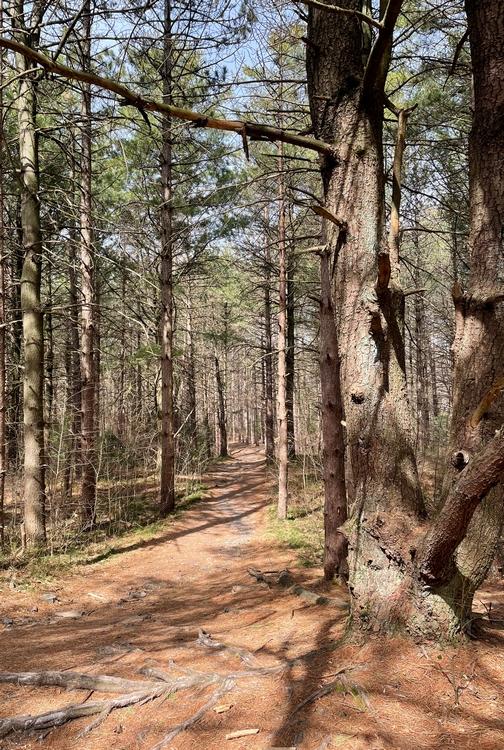 Boxcar Rocks trail