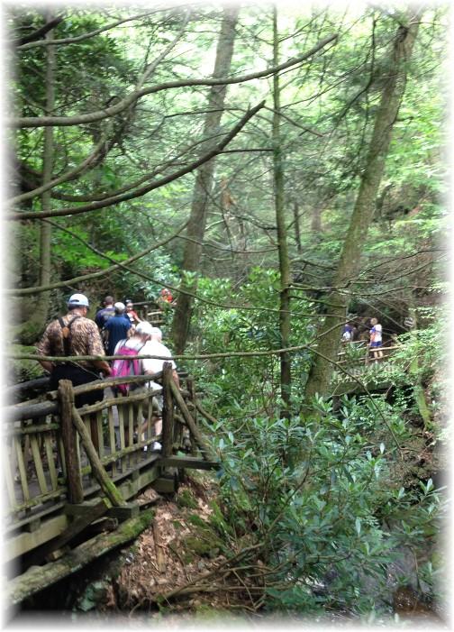 Forest walkway in Bushkill Falls, PA 7/21/15