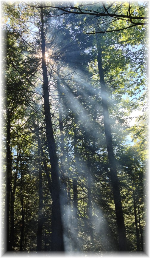 Campfire smoke in trees 9/7/14
