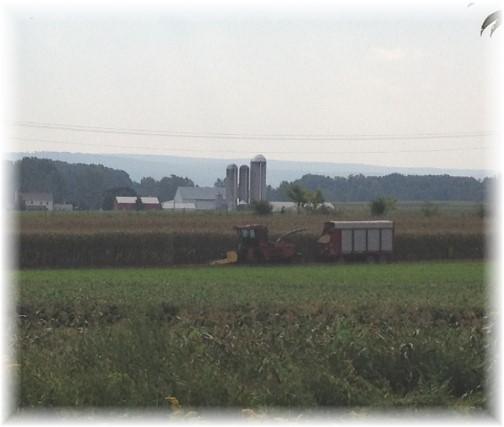 Cumberland County corn harvest 9/6/14