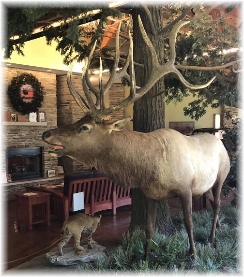 Elk Country Visitor's Center bull elk