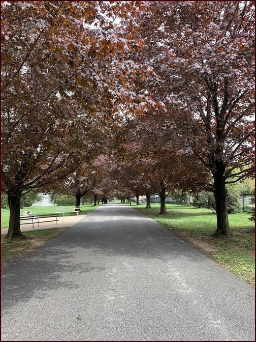 Trees in Gettysburg, PA 4/28/19