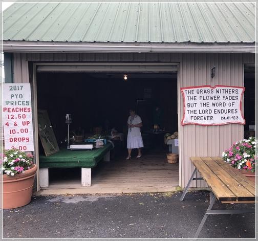 Honey Bear Orchards, Lebanon County, PA 8/13/18