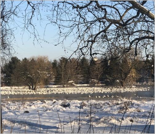 Farm pond, Spangler Road, Lebanon County, PA 3/5/19 (Click to enlarge)