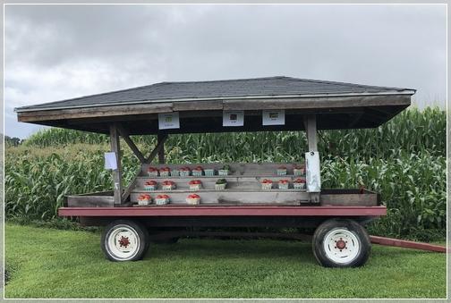 Lebanon County produce wagon 8/3/18