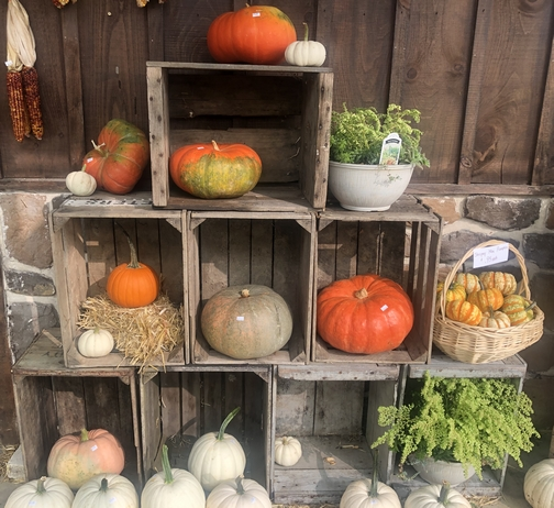 Lebanon County pumpkins and gourds