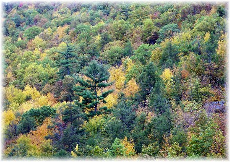 Lehigh Gorge Fall Foliage