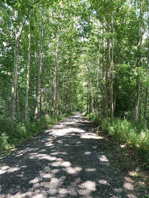 Old Railroad grade trail, near Tioga, PA