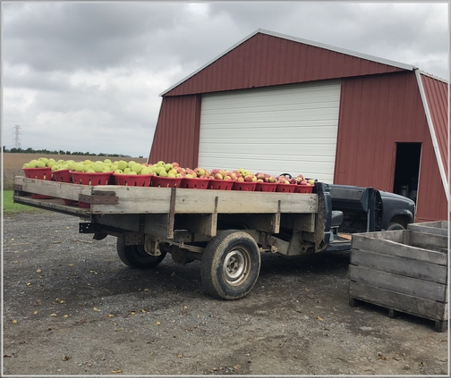 Seyfert Orchards apple harvest truck