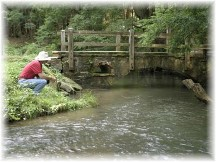 Trout fishing stream