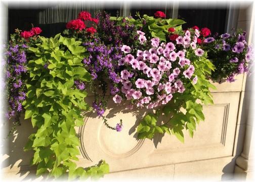 Flowers in Wellsboro PA 8/15/15