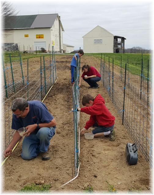 Pierce family planting peas 4/15/17
