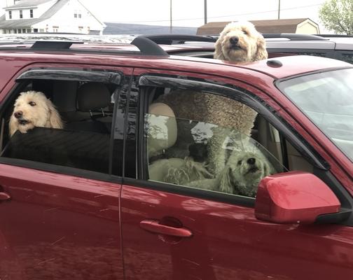 Berks County dogs 4/23/19